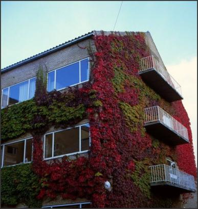 丹麦奥尔胡斯大学