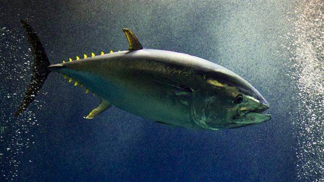 地球10大濒临灭绝海洋动物