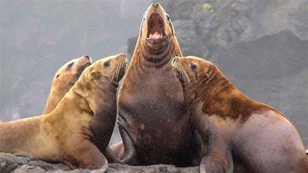 地球10大濒临灭绝海洋动物 加拿大还有好多