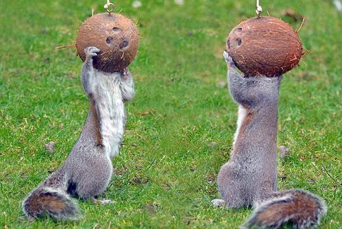 每年的1月21日是英国的松鼠日,充满爱心的英国人可是特意为了这群可爱