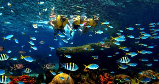 海洋馆汇集了超过800种海洋生物,其中包括双吻前口蝠鲼,伊氏石斑鱼