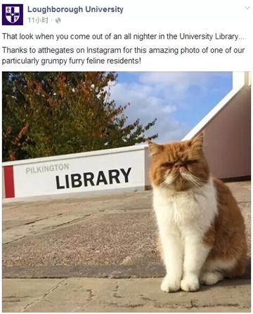 """据说小猫咪的名字叫""""查理"""""""
