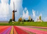 荷兰奖学金基本可以分为哪三类?
