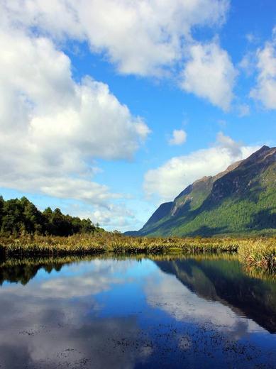 在新西兰,牛羊是没有圈的,基本上处于半野生状态,农场主人一般把牧场